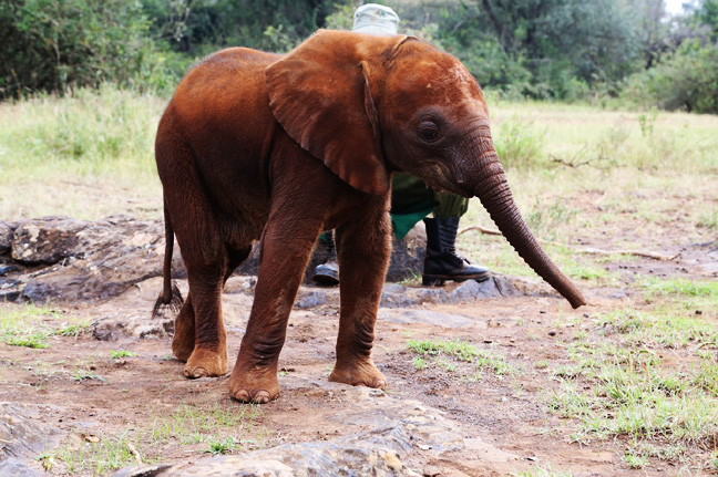 The rescue of Mbegu