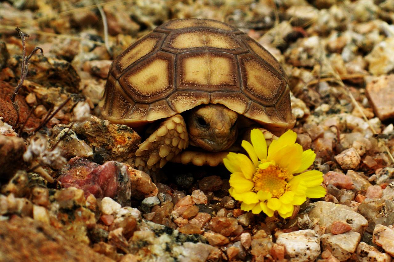 Tortoise Sanctuary