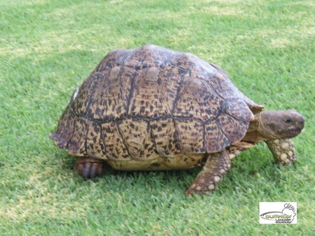 GALLERY-Tortoise 07