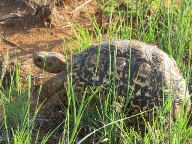 GALLERY-Tortoise01