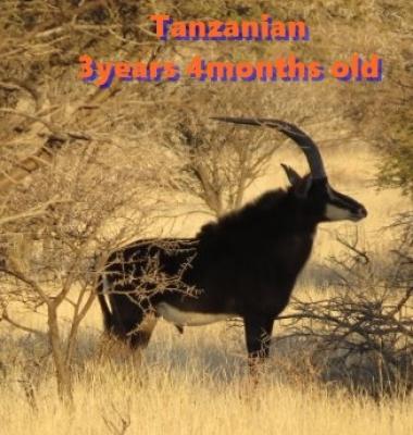 GALLERY-Tanzanian02