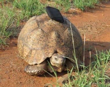 GALLERY-Tortoise02