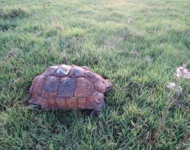 GALLERY-Tortoise06