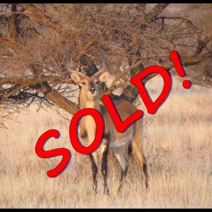 lechwe sold