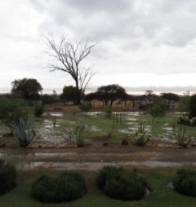 reen op plaas Langkop