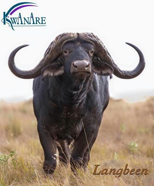 halfbrother to Bull Boshof
